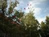 evnyito2012-4